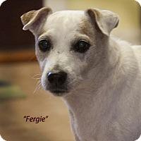 Adopt A Pet :: FERGIE - Terra Ceia, FL