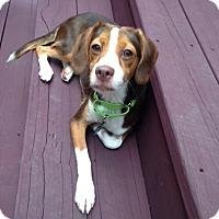 Adopt A Pet :: Cami - Houston, TX
