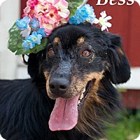 Adopt A Pet :: Bess - Houston, TX