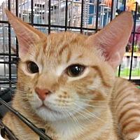 Adopt A Pet :: Garfield - Yorba Linda, CA