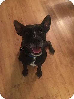 Miniature Schnauzer/Terrier (Unknown Type, Small) Mix Dog for adoption in Gainesville, Florida - Odie
