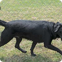 Adopt A Pet :: Shadow *AT BASIC TRAINING* - Ada, OK