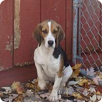 Adopt A Pet :: Emma - Transfer, PA