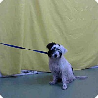 Adopt A Pet :: URGENT 12/1 @ DEVORE - San Bernardino, CA