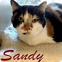 Adopt A Pet :: SANDY - Gloucester, VA