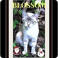 Adopt A Pet :: Blossom - Highland, MI