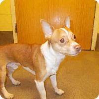 Adopt A Pet :: *ALBERT - Upper Marlboro, MD