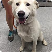 Adopt A Pet :: Charlie - Cashiers, NC