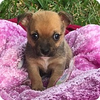 Adopt A Pet :: Hector - Davie, FL