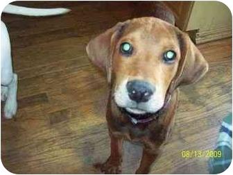 Cooper | Adopte...
