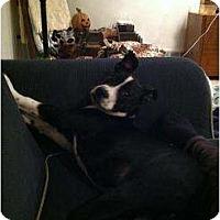 Adopt A Pet :: EJ - Alliance, NE