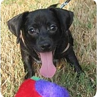 Adopt A Pet :: Winston - Kingwood, TX