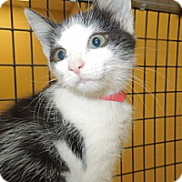 Adopt A Pet :: April - Medina, OH