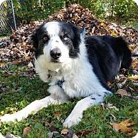 Adopt A Pet :: Keeran - New Foster - Midwest (WI, IL, MN), WI