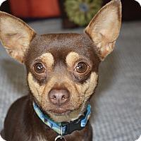 Adopt A Pet :: Keegan - Yorba Linda, CA