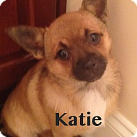 Adopt A Pet :: Katie - Indian Trail, NC