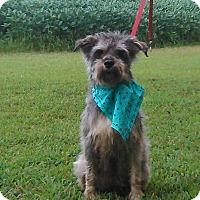 Adopt A Pet :: Elsie - Hollis, ME