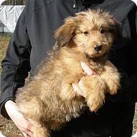 Adopt A Pet :: MILA - gorgeous - Stamford, CT