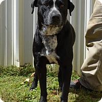 Adopt A Pet :: Leroy - Boston, MA