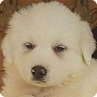 Adopt A Pet :: Faith - Allentown, PA