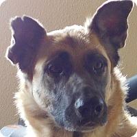 Adopt A Pet :: Luna - MINNEAPOLIS, KS