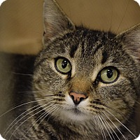 Adopt A Pet :: Lexie - Washington, PA