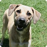 Adopt A Pet :: Blu - Lufkin, TX