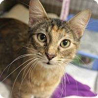 Adopt A Pet :: Hazel - Naperville, IL