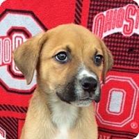 Adopt A Pet :: Swayze - East Sparta, OH
