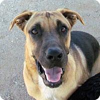Adopt A Pet :: Milo - San Tan Valley, AZ