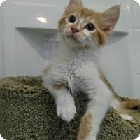 Adopt A Pet :: Victor - Fort Collins, CO
