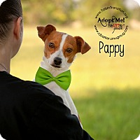Adopt A Pet :: Pappy - Friendswood, TX