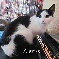 Adopt A Pet :: Alexus - Culpeper, VA