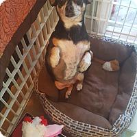 Adopt A Pet :: Harper - McMinnville, TN