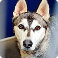 Adopt A Pet :: Vanna - San Jacinto, CA