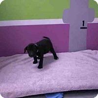 Adopt A Pet :: JAZLYN - Houston, TX