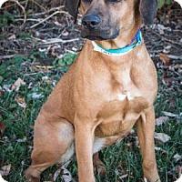Adopt A Pet :: Carla - Berkeley Heights, NJ