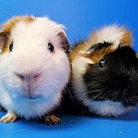 Adopt A Pet :: Denali and Kenai - Lewisville, TX