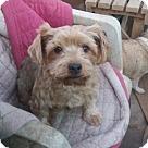 Adopt A Pet :: Chico - Adoption pending
