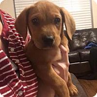 Adopt A Pet :: Easton - Houston, TX