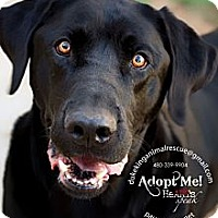Adopt A Pet :: Beau Blue - Scottsdale, AZ