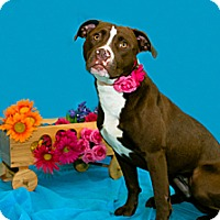 Adopt A Pet :: Ruby - Lima, OH