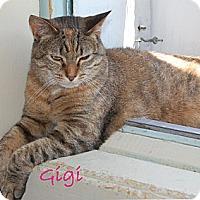 Adopt A Pet :: Gigi4 - Plainville, MA