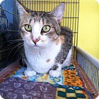 Adopt A Pet :: Apple - Newport Beach, CA