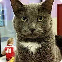 Adopt A Pet :: Dexi - Grayslake, IL