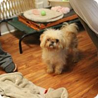 Adopt A Pet :: Casper - Daleville, AL