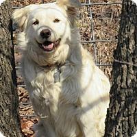 Adopt A Pet :: Baxter - Kyle, TX