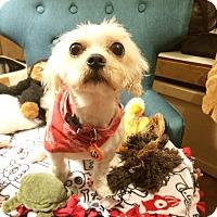 Adopt A Pet :: Teddie - Seattle, WA