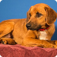 Adopt A Pet :: Polly - Berkeley Heights, NJ