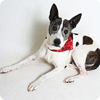 Adopt A Pet :: Jackie - Redding, CA